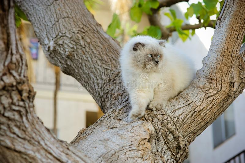 Cute handsome beautiful cat walking on tree. Outdoor home pet. M royalty free stock photography