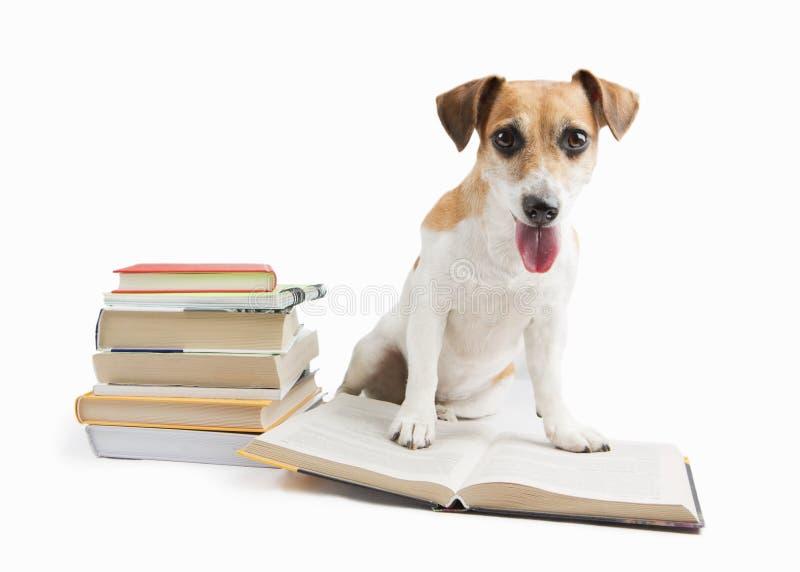 Cute happy dog back to school stock photos