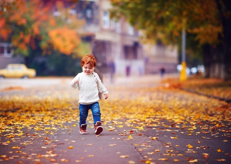 Cute redhead toddler baby boy walking among fallen leaves in autumn park. Cute happy redhead toddler baby boy walking among fallen leaves in autumn park stock photos