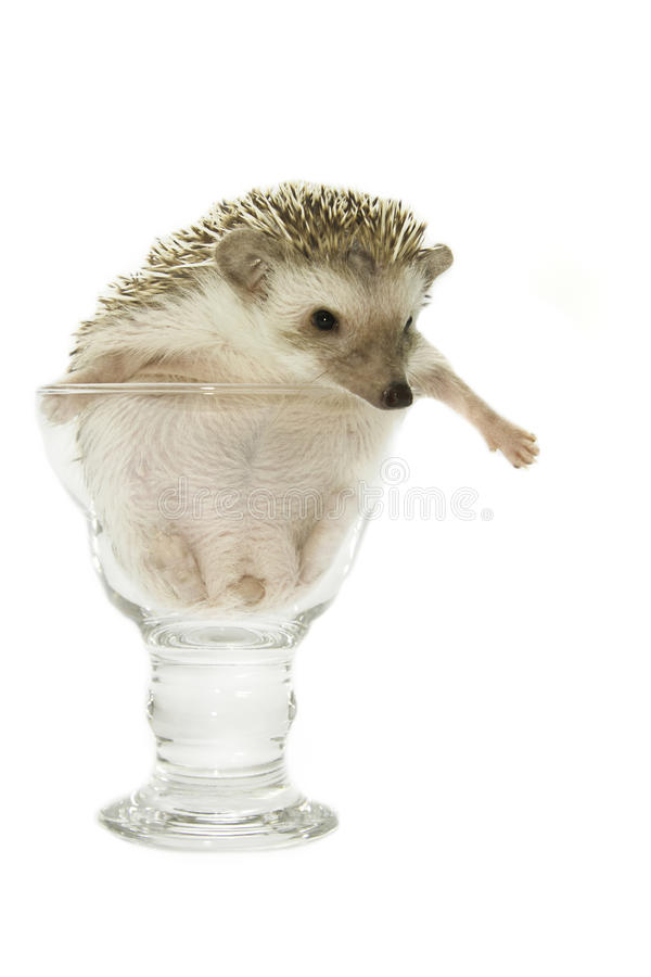 Free Cute Hedgehog In The Wine Glass Royalty Free Stock Images - 35825999