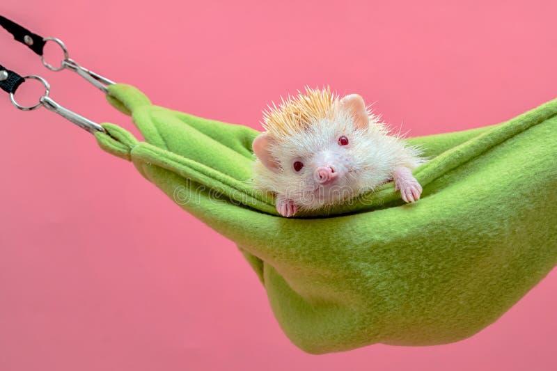 Hedgehog sleep in the cot. Cute hedgehog sleep in the cot stock photography