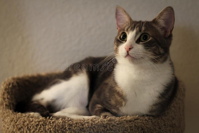Cute home cats royalty free stock photography