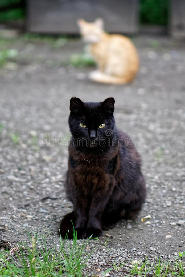 Cute homeless black and red cats. The responsibility of people for tamed animals. Daylight royalty free stock images