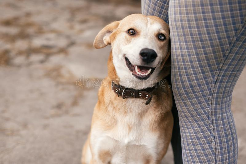 Cute homeless dog with sweet looking eyes sitting at people legs and smiling in summer park. Adorable yellow dog with funny cute. Emotions hugging to person royalty free stock photos