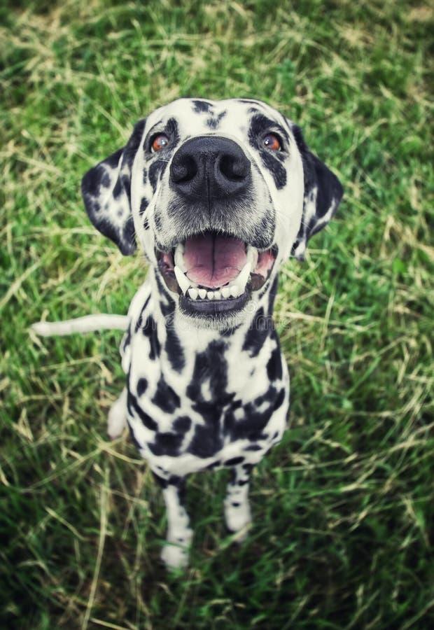 Cute-Hund im Gras — kräftig und radial verschwommen lizenzfreie stockfotografie