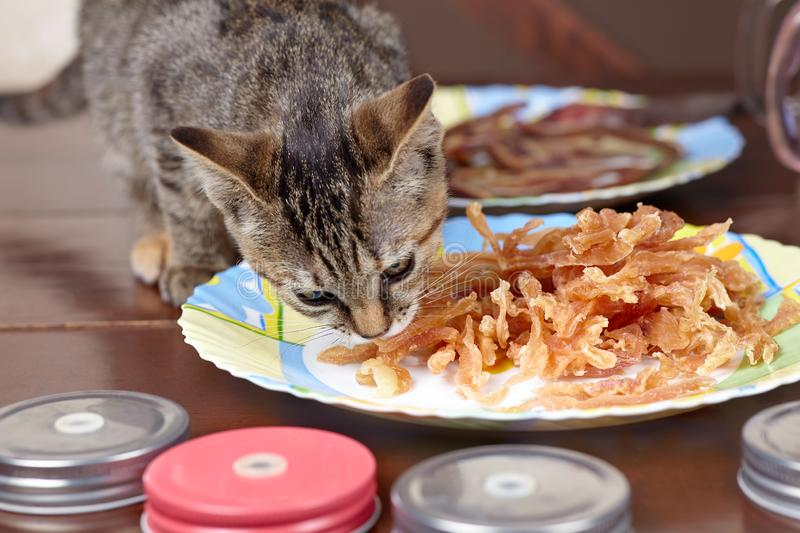 Cute hungry little kitten eats chicken treats from the plate. Cat at home. stock image