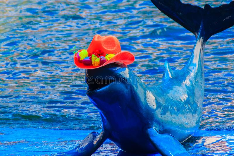 Cute Irrawaddy dolphin (Orcaella brevirostris) is wearing orange. Hat and dancing on the board in the dolphin shows royalty free stock photography
