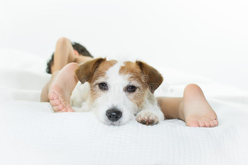 CUTE JACK RUSSELL DOG ON BED WITH ITS LITTLE CHILD OWNER ISOLATE. D ON WHITE BACKGROUND royalty free stock photography