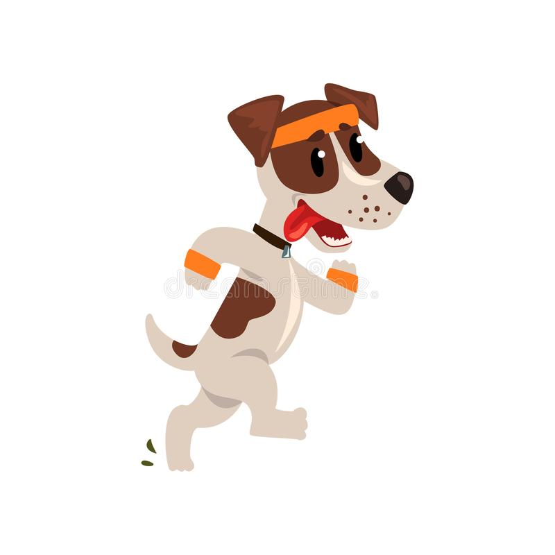 Cute jack russell terrier athlete running putting his tongue, funny sportive pet dog character doing sports vector. Illustration isolated on a white background royalty free illustration