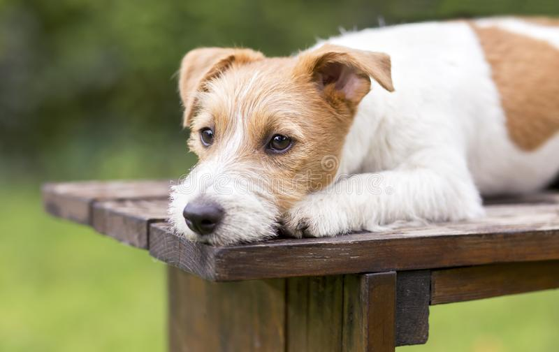 Cute dog puppy lying on a wooden bench stock photography