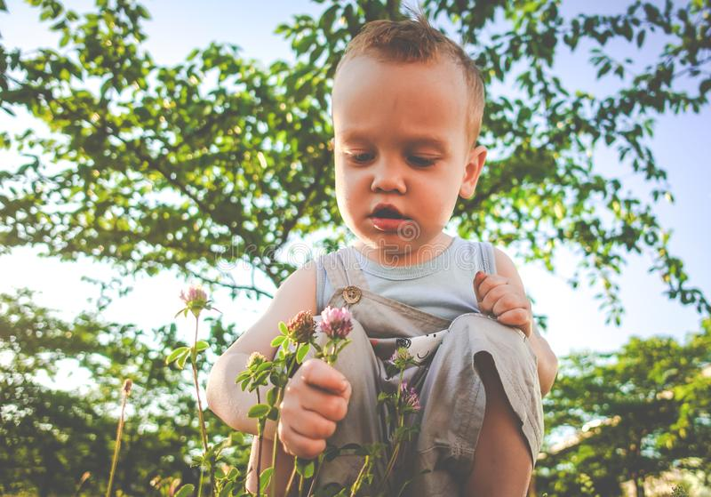 Boy child in a summer park stock image