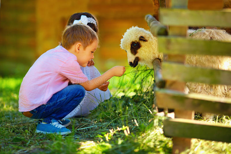 Cute kids feeding lamb with grass, countryside royalty free stock photos