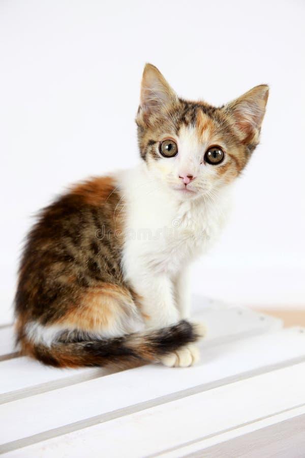 Cute kitten stock photos