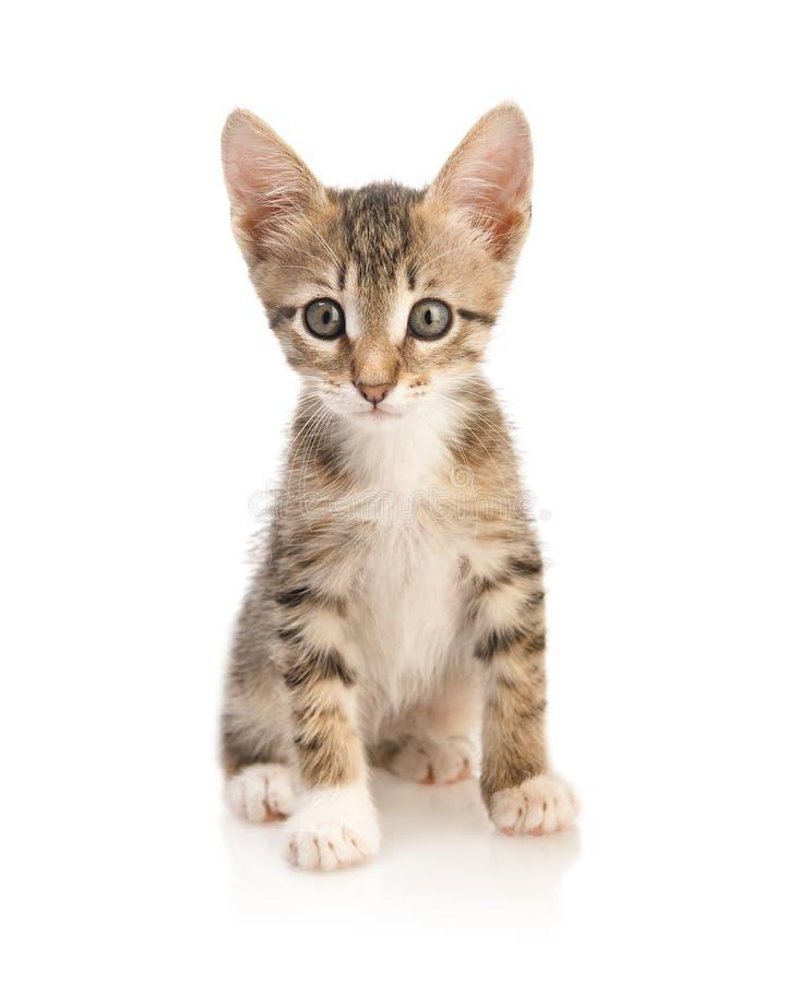 Free Cute Kitten Stock Photography - 13477992
