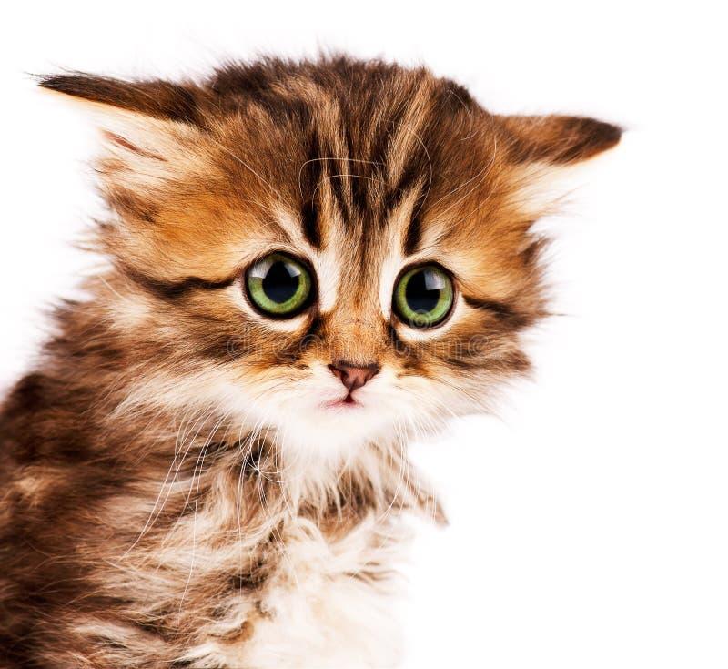 Free Cute Kitten Royalty Free Stock Photo - 19723795