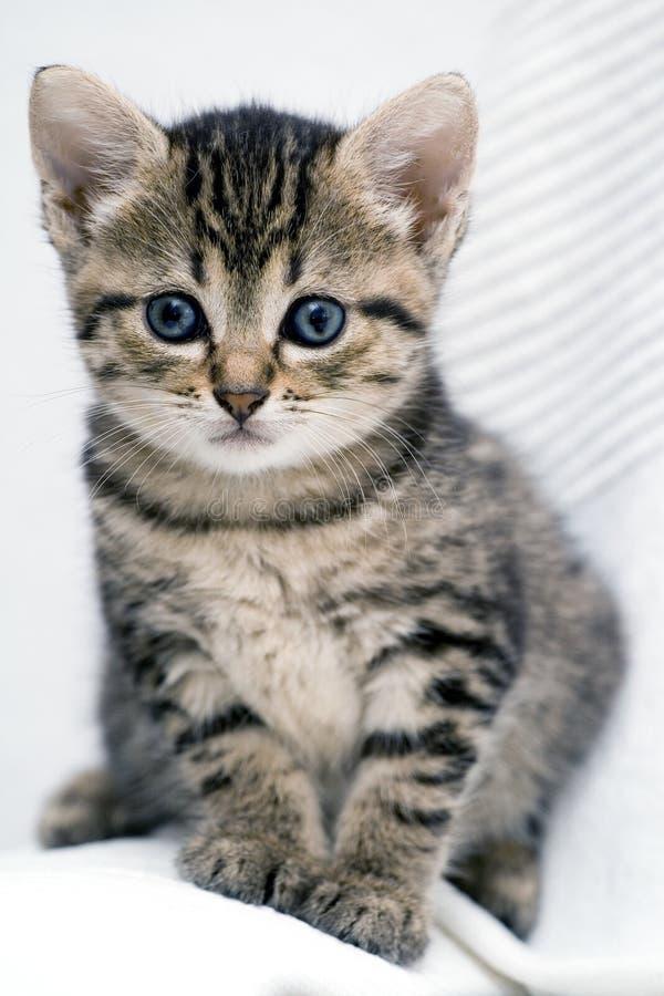 Cute kitten. Cute striped kitten on white background