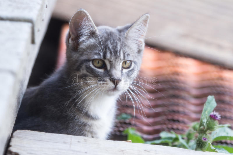 Cute kitten. Adorable kitten close up with a soft focus royalty free stock photos