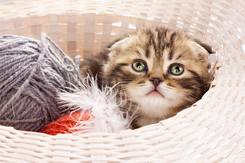 Cute kitten in a basket stock images