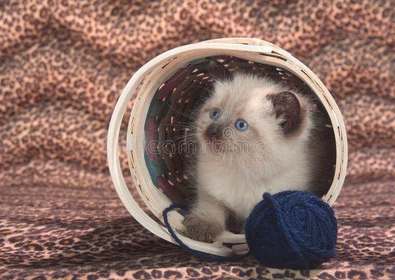 Cute kitten in basket with blue yarn stock photos