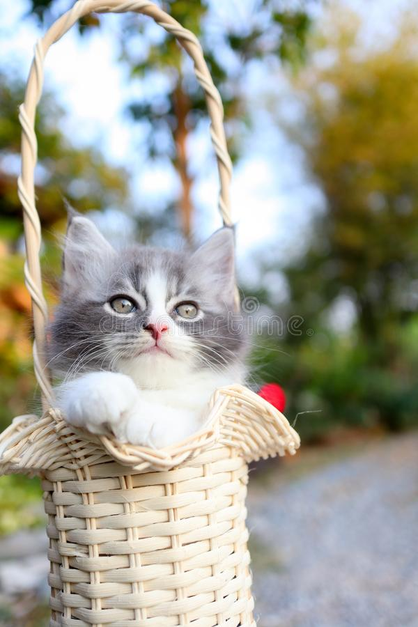 Cute kitten in the basket in a garden stock photography