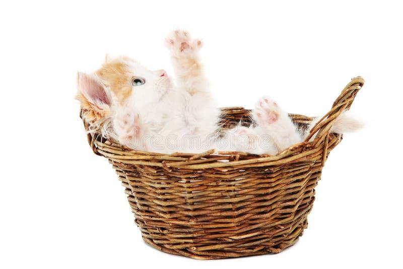 Cute kitten in basket stock image