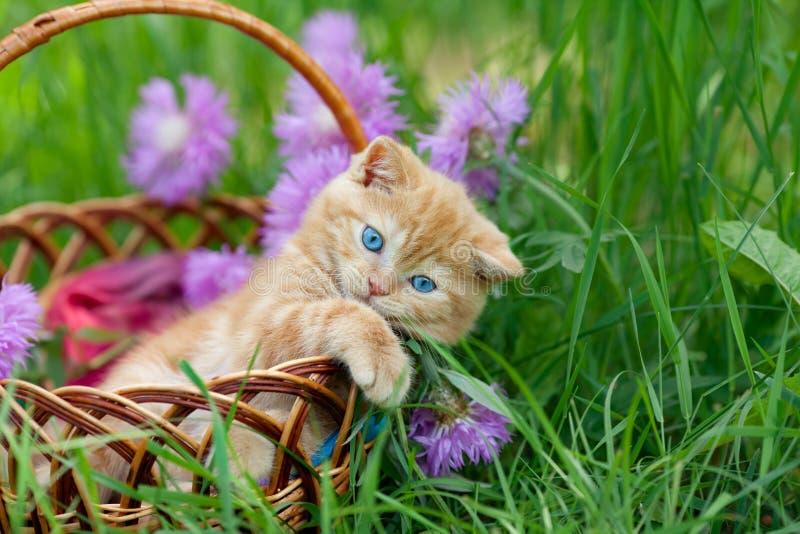 Cute kitten in a basket stock photos