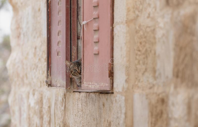 Cute kitten behind window looking to camera. S royalty free stock images