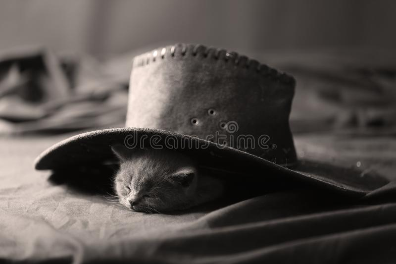 Cute Kitten And Black Hat Stock Photo Image Of Hats 107136074