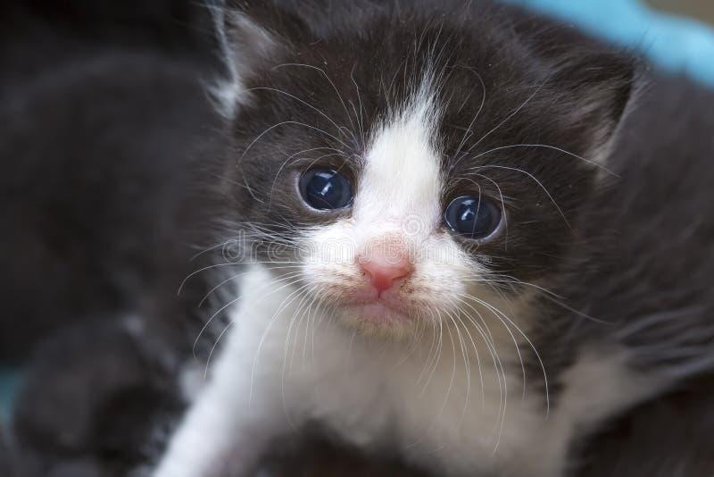 Cute kitten cat stock images