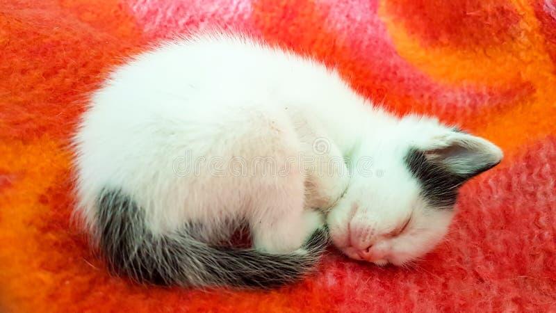 Cute kitten cat stock photo