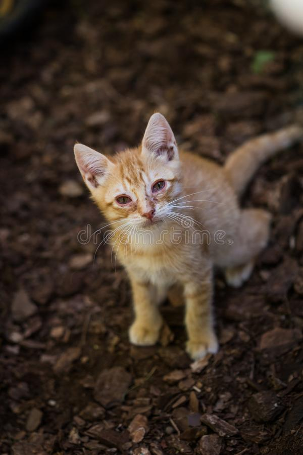 Cute kitten cat portrait on a brown outdoor ground. Close up still royalty free stock photo