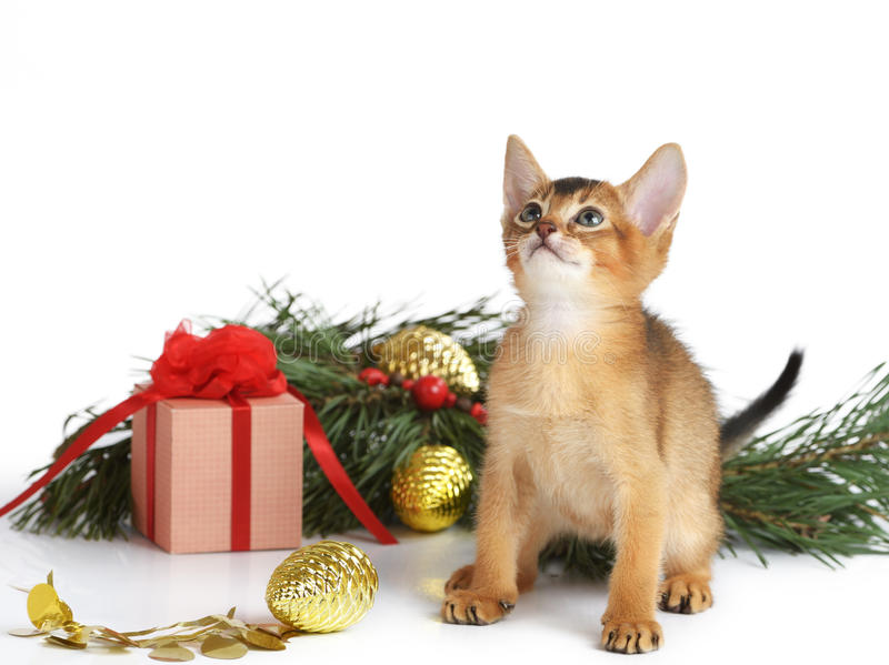 Cute kitten with christmas tree and gift box royalty free stock photo