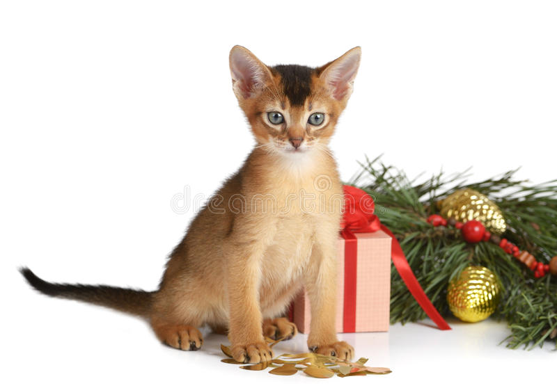 Cute kitten with christmas tree and gift box royalty free stock image
