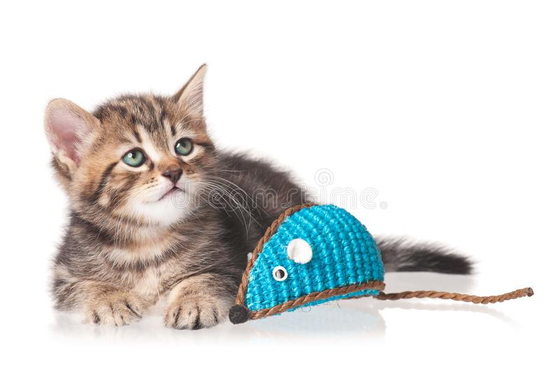 Download Cute kitten stock image. Image of decoration, activity - 33299765