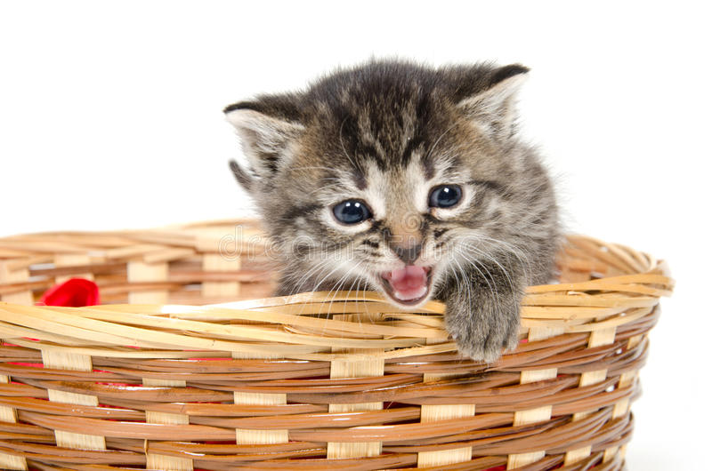 Cute kitten crying stock photos