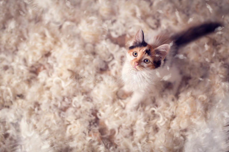 Cute kitten and feathers royalty free stock photography