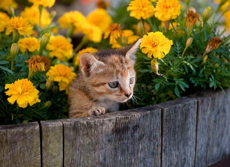 Cute Kitten In Flowers Royalty Free Stock Image