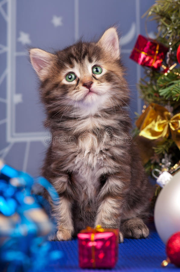 Cute kitten. Cute fluffy kitten near Christmas spruce with gifts and toys stock photo