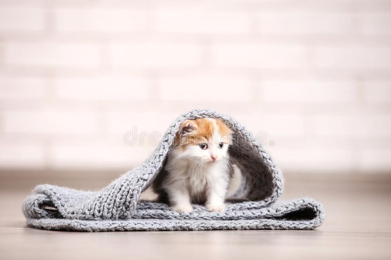 Cute kitten. With grey scarf on the floor royalty free stock images
