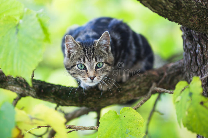 Cute kitten huddles in a limetree royalty free stock images