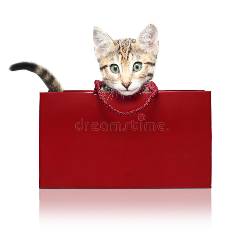 Free Cute Kitten In A Red Shopping Bag Stock Photography - 29296502