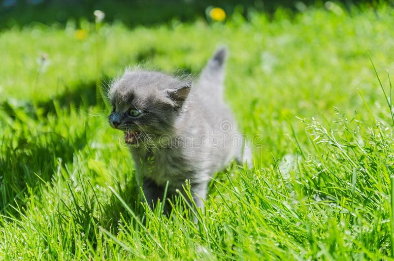 A cute kitten learns to take the first independent steps. In the open air stock photos