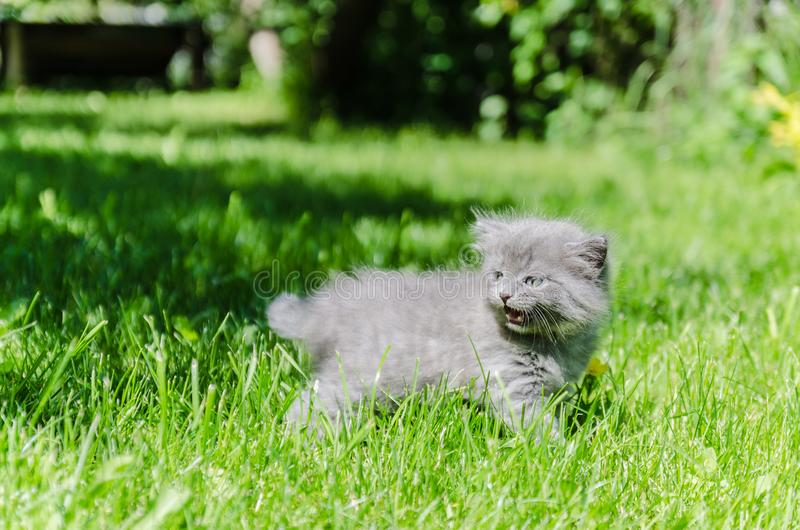 A cute kitten learns to take the first independent steps. In the open air royalty free stock images