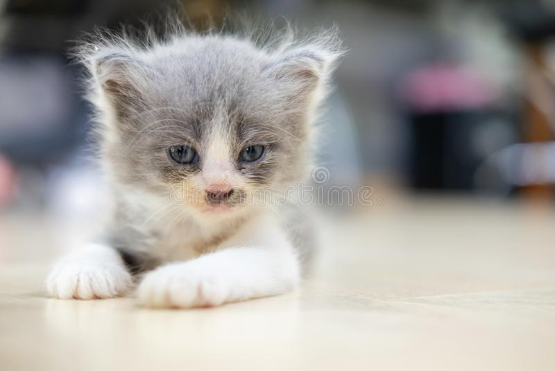 Cute kitten liegt auf dem Boden und sieht geradeaus lizenzfreies stockbild