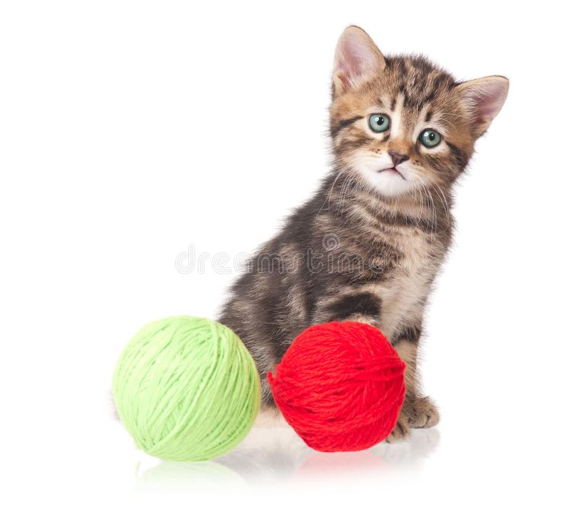 Download Cute kitten stock photo. Image of playing, game, attention - 33299764