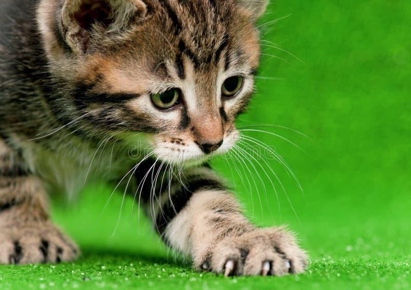 Cute kitten. Cute little kitten playing on artificial green grass stock photography