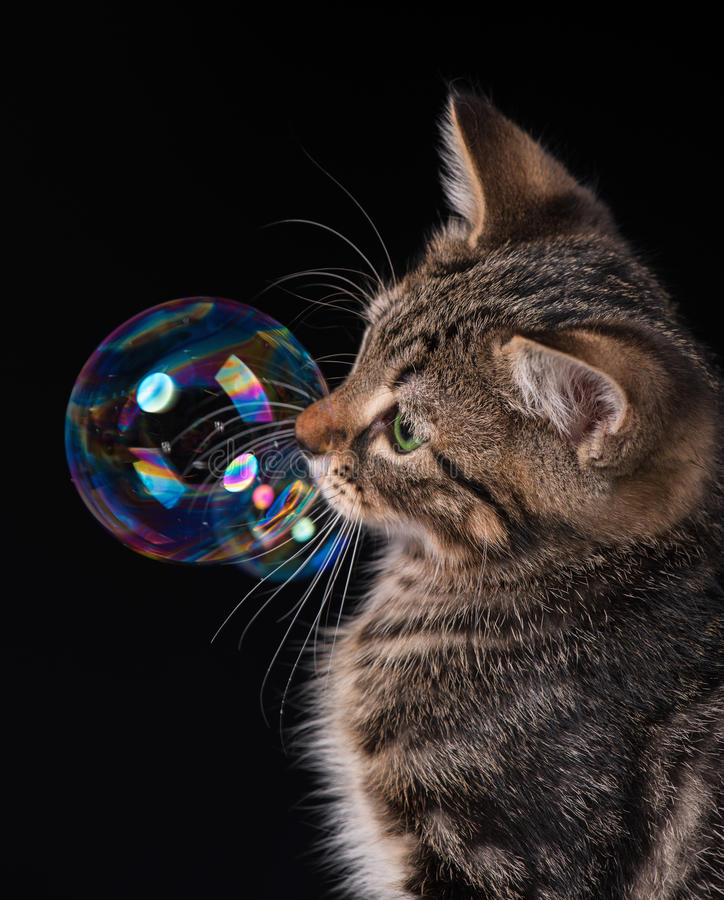 Cute kitten. Cute little kitten with soap bubbles over black background stock photography