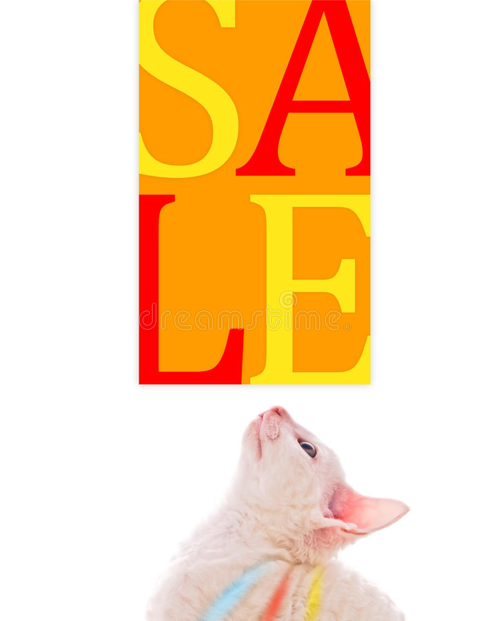 Cute Kitten Looking at Sale Sign. A cute little kitten looking at a sale sign stock images