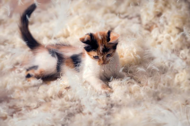 Cute kitten lying in feathers royalty free stock photography