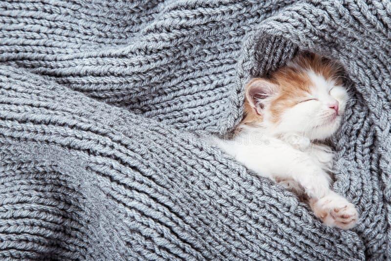 Cute kitten. Lying on grey scarf stock photos